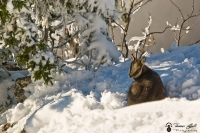 repos en hiver