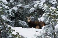 eterlou dans la neige