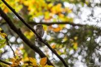 chevechette en automne