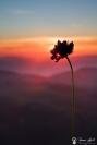 trefle au coucher du soleil