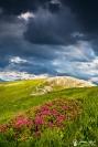 arc en ciel et rhododendron