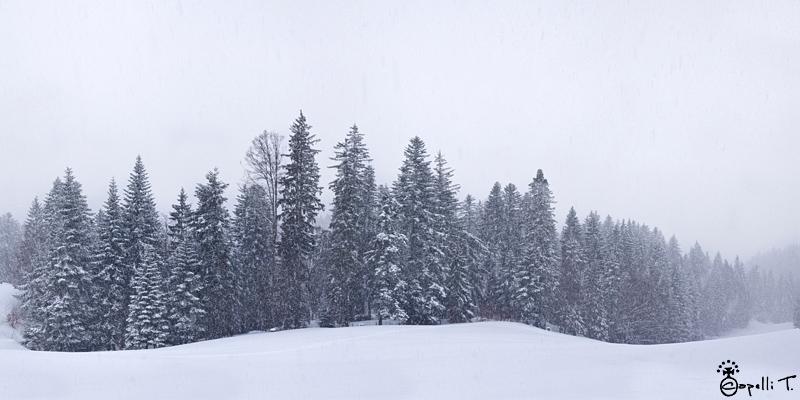 Foret du Billon sous la neige