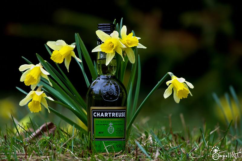 bouteille de chartreuse verte au milieu d'un bouquet de jonquilles