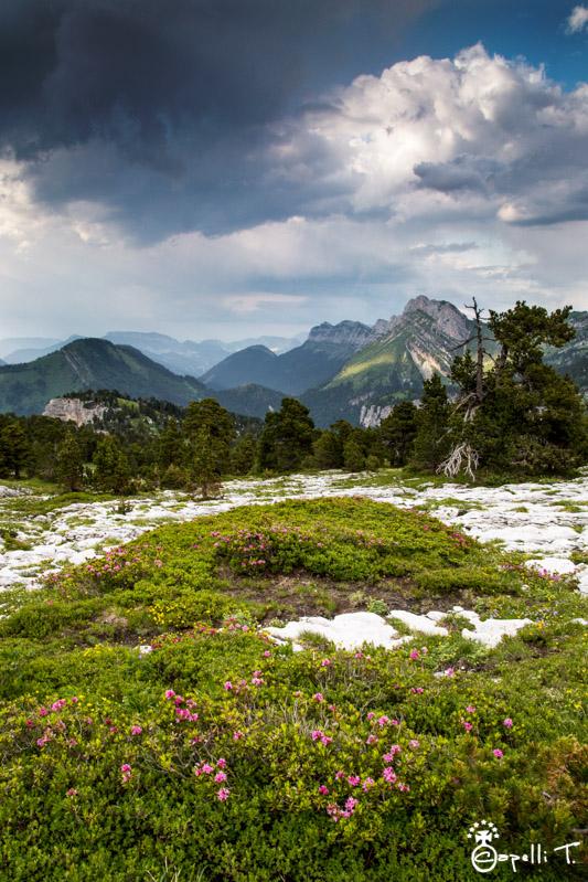 Photo des lapiaz sur les hauts plateaux de chartreuse - thomas CAPELLI