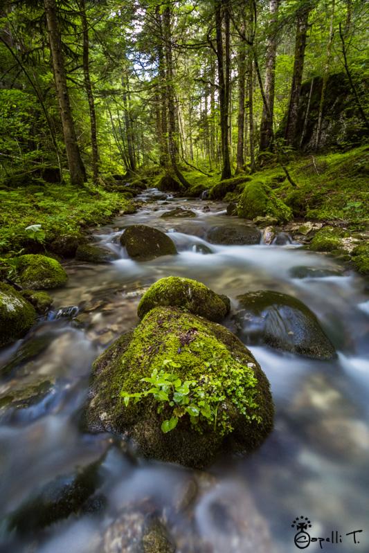 phot du ruisseau de tenaison - Thomas CAPELLI