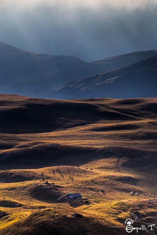 bergerie et troupeau sur le plateau d'emparis - Thomas Capelli