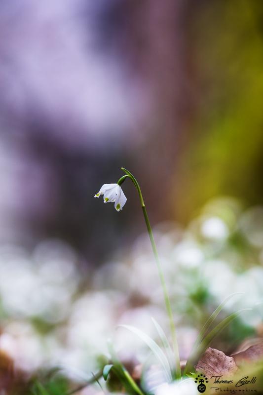 4-flaurs-printemps
