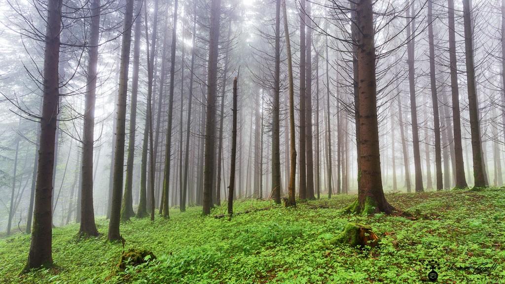 Brouillard dans les forets de chartresue - Thomas Capelli