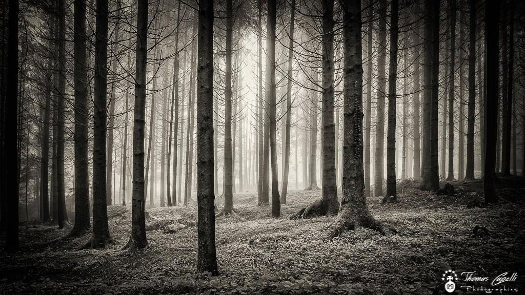 Forêt de chartreuse  - Thomas Capelli