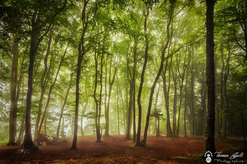 hetraie dans le parc naturel régional de chartreuse - Thomas Capelli