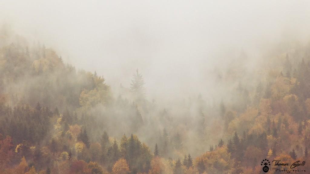 Brumes sur les forets de chartreuse en automne - Thomas Capelli