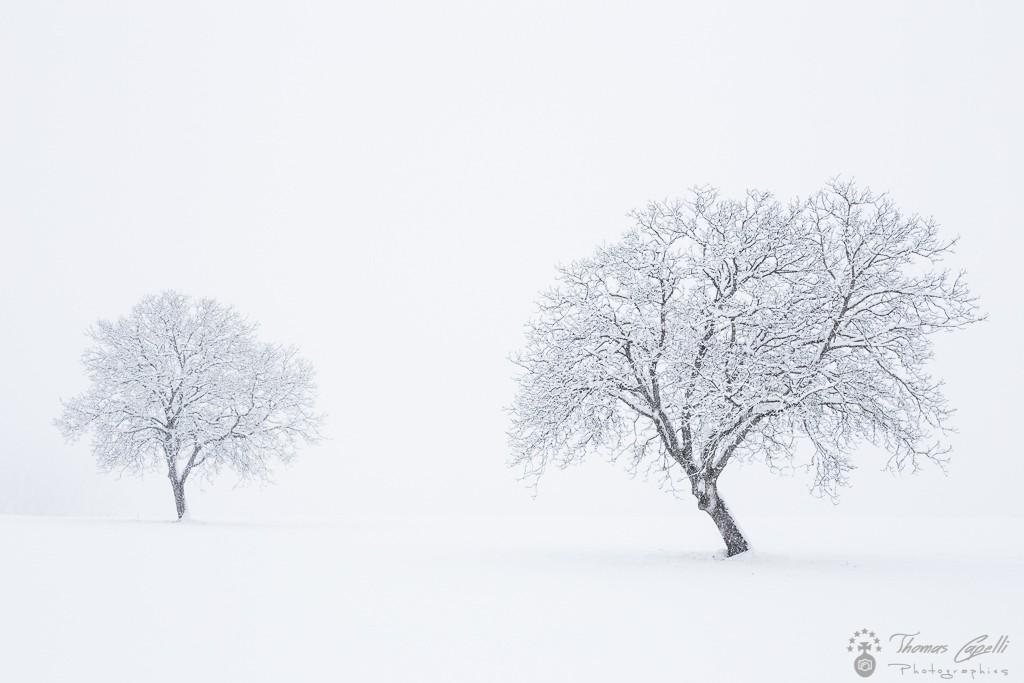 hiver sous la neige - Thomas Capelli