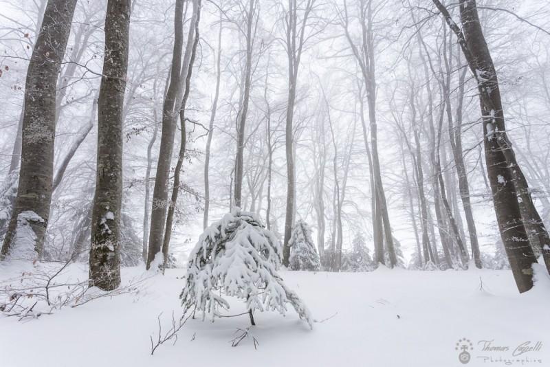 hetraie sous la neige - Thomas Capelli