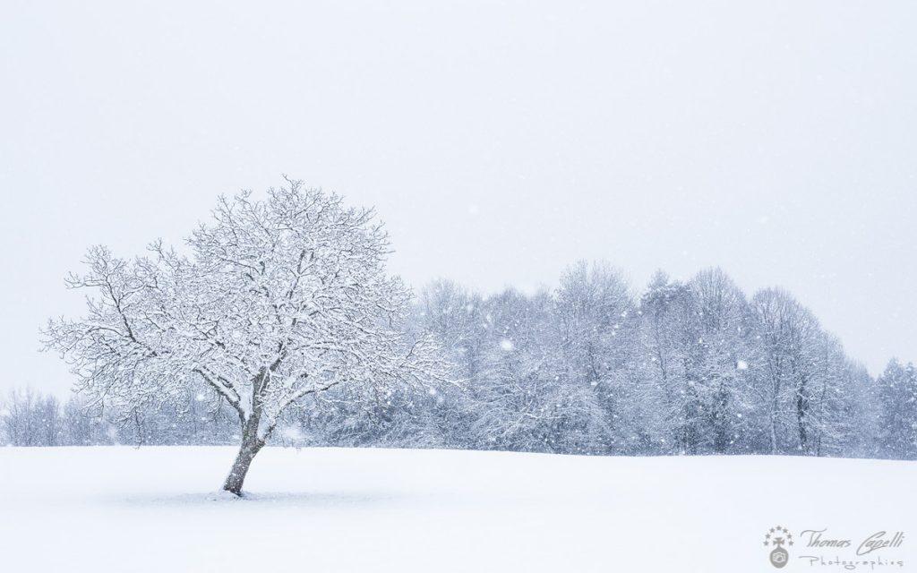 noyer-neige-chartreuse - Thomas Capelli