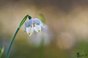 galerie de photos de fleurs de chartreuse - thomas capelli