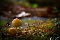 champignon col de la ruchère