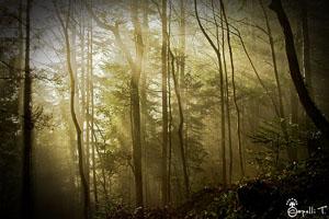 galerie de photo de paysage dans les forets de chartreuse - thomas capelli